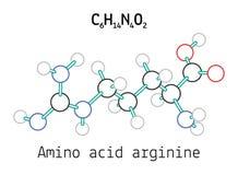 Molécula de la arginina del aminoácido C6H14N4O2 Fotografía de archivo libre de regalías