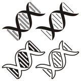 Molécula de la DNA Imagen de archivo