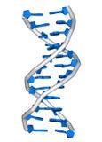 Molécula de la DNA Fotos de archivo libres de regalías