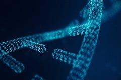 Molécula de la DNA de Digitaces, estructura Genoma humano del código binario del concepto Molécula de la DNA con los genes modifi imágenes de archivo libres de regalías