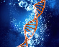 Molécula de la DNA en agua Fotografía de archivo