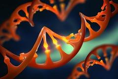 Molécula de la DNA Modificación genética Estudio de la estructura del genoma humano libre illustration