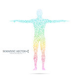 Molécule de structure de l'homme ADN de corps humain de modèle abstrait Médecine, la science et technologie Vecteur scientifique  Photo stock