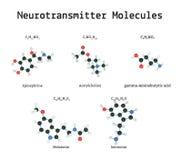 Molécules de neurotransmetteur réglées Image libre de droits