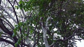 A mola, árvores de folhosa da floresta, iluminou-se através das copas de árvore verdes vídeos de arquivo