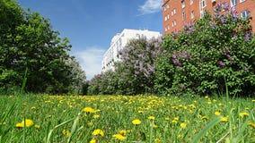 A mola é completamente balanço Cidade de florescência de Kemerovo Fotografia de Stock Royalty Free