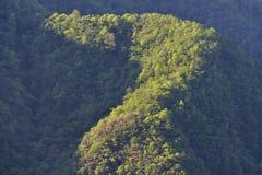 A mola é verde Foto de Stock