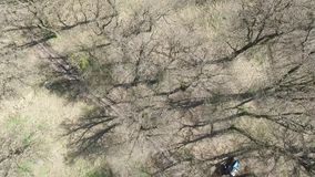 Mola adiantada Árvores sem folhas video estoque