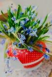A mola adiantada bonita floresce, siberica do scilla, no bule vermelho na tabela branca Fotografia de Stock