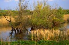 A mola adiantada coloca o lago e as árvores Fotografia de Stock Royalty Free