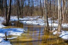 Mola adiantada na floresta, paisagem ensolarada do março Imagem de Stock