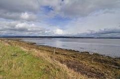Mola adiantada no louro da lama, Columbia Britânica Imagens de Stock Royalty Free