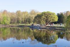 Mola adiantada no parque Imagens de Stock Royalty Free