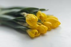 A mola amarela bonita floresce o açafrão imagens de stock royalty free