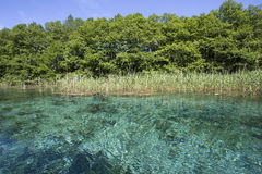 Mola azul desobstruída Foto de Stock