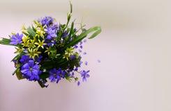 A mola azul e amarela floresce em um fundo branco imagens de stock
