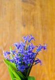 A mola azul floresce com folhas verdes em um backgroun de madeira velho Imagens de Stock