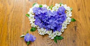 A mola azul floresce com folhas verdes em um fundo alaranjado Imagem de Stock Royalty Free