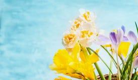 A mola bonita floresce no fundo de turquesa, vista lateral Foto de Stock Royalty Free