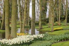 A mola bonita floresce no Keukenhof, os Países Baixos imagens de stock royalty free
