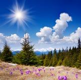 Flores bonitas da mola nas montanhas Imagem de Stock Royalty Free