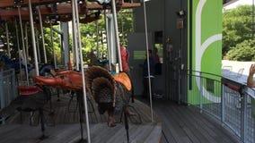 Mola 62 Carousel w Miasto Nowy Jork zdjęcie wideo