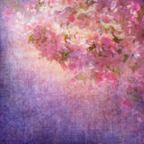 Mola Cherry Blossom Fotografia de Stock Royalty Free