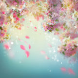 Mola Cherry Blossom Background Foto de Stock Royalty Free