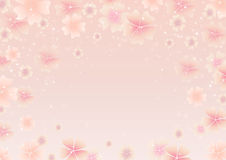 Mola Cherry Blossom Fundo cor-de-rosa das flores da mola Imagens de Stock