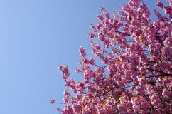 Mola Cherry Blossoms fotos de stock royalty free