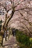 Mola Cherry Blossoms de Vancôver canadá Imagens de Stock
