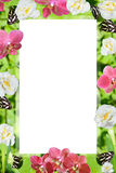 A mola colore o quadro das orquídeas e dos narcissuses Fotos de Stock Royalty Free