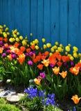 Mola colorida que ajardina com tulipas Imagem de Stock Royalty Free