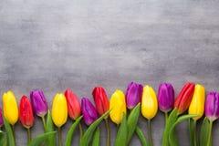 A mola colorido floresce, tulipa em um fundo cinzento fotografia de stock royalty free