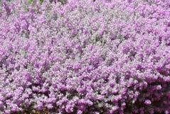Mola com flores roxas Imagens de Stock