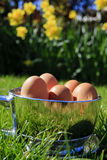 Mola - copo de ovo de Easter (retrato) Foto de Stock