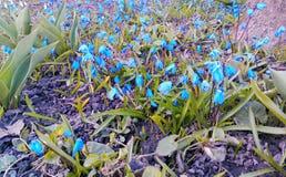 a mola da beleza floresce a felicidade da ternura do calor do nascimento da vida do jardim das tulipas Foto de Stock Royalty Free