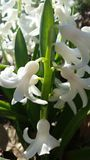 mola da flor branca Fotos de Stock