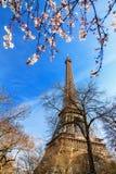 Mola da flor de Eiffel Foto de Stock Royalty Free