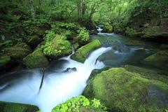 Mola de água na floresta fotos de stock