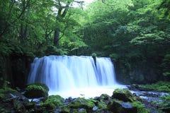 Mola de água na floresta foto de stock royalty free