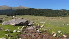 Mola de água que flui no vale da montanha Córrego do rio e Mountain View verde video estoque