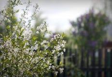 Mola de florescência Imagem de Stock