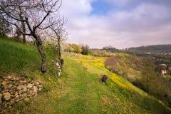 Mola de florescência nos montes italianos Imagens de Stock