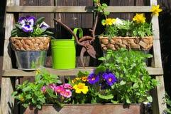 Mola de jardinagem da flor Fotografia de Stock Royalty Free
