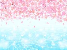 Mola de Sakura Sakura Imagem de Stock