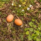 Mola, dois ovos na terra com plantas Fotos de Stock Royalty Free