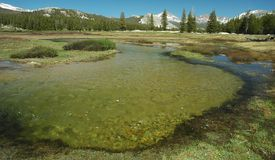 Mola dos prados de Tuolumne Foto de Stock