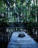 A mola e as árvores Foto de Stock Royalty Free
