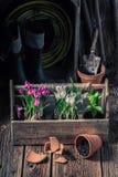 Mola e flores novas no solo escuro fértil Fotos de Stock